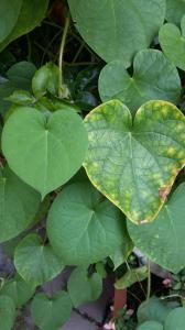 Verbindungen, die Freude bringen - Verbindungen, die Frieden schaffen - Verbindungen, die Liebe schaffen